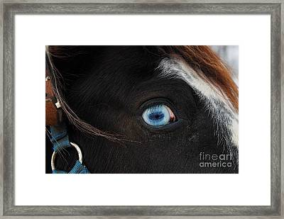 Blue Eyed Horse Framed Print