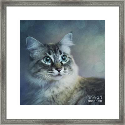 Blue Eyed Queen Framed Print by Priska Wettstein