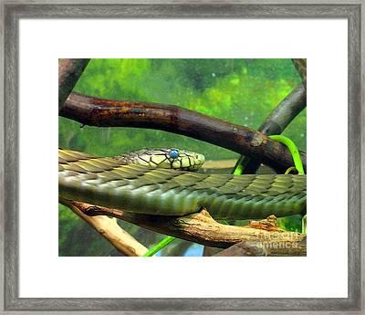 Blue Eyed Snake Framed Print by Patricia Januszkiewicz