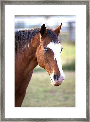 Framed Print featuring the photograph Blue Eyes by Gordon Elwell