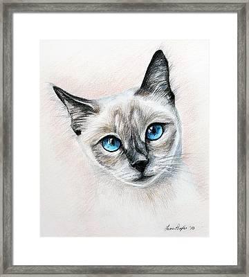 Blue Eyes Framed Print by Lena Auxier