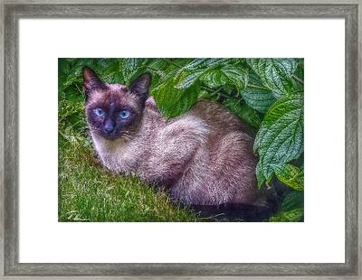 Framed Print featuring the photograph Blue Eyes - Signed by Hanny Heim