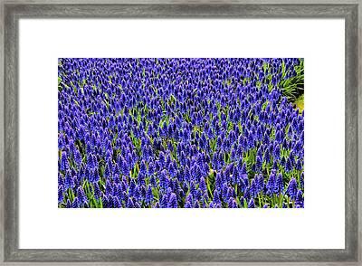 Blue Fields Framed Print