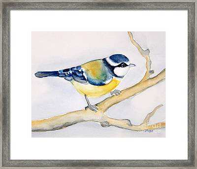 Blue Finch Framed Print by Inese Poga