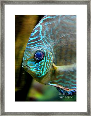 Blue Fish - Digital Painting Framed Print by Carol Groenen