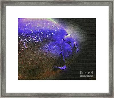 Blue Fish Framed Print by JJ McLerran