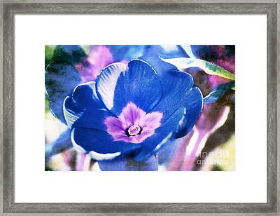 Blue Flower Framed Print by Angela Bruno