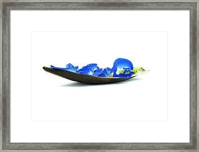 Blue Flower Boat Framed Print by Aged Pixel