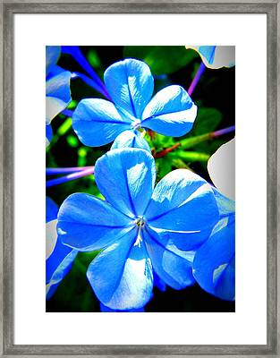 Framed Print featuring the photograph Blue Flower by David Mckinney