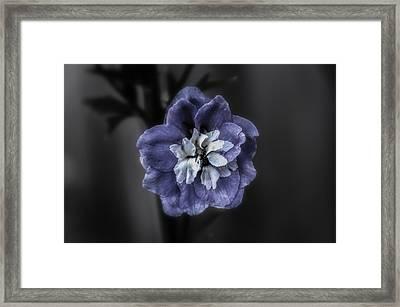 Blue Flower Framed Print by Michael Demagall