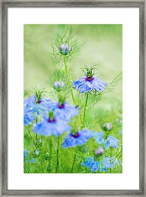 Blue Flowers Framed Print by Diana Kraleva