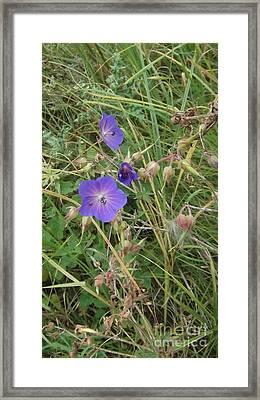 Blue Flowers Framed Print by John Williams