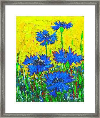 Blue Flowers - Wild Cornflowers In Sunlight  Framed Print by Ana Maria Edulescu