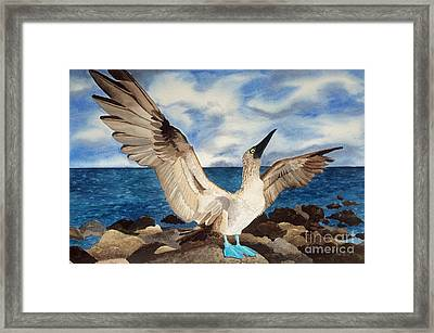 Blue-footed Booby Framed Print by Katie Schneider