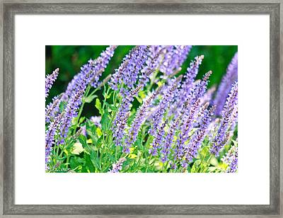 Blue Fortune Flower Spikes Framed Print by Ann Murphy