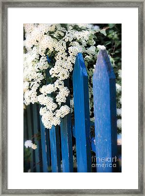 Blue Garden Fence With White Flowers Framed Print