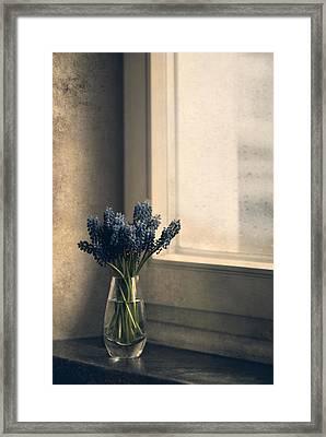 Blue Grape Hyacinth Flowers At The Window Framed Print