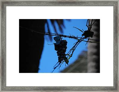 Blue Grapes Framed Print by Dany Lison