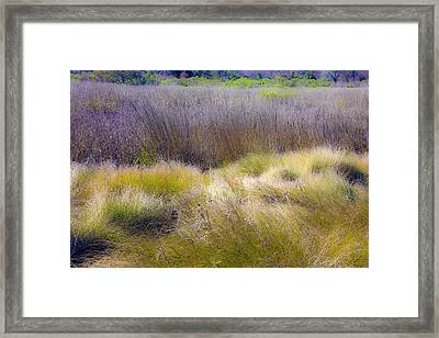 Blue Grass Framed Print by Paula Porterfield-Izzo