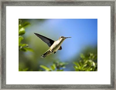 Blue Green Hummingbird Art Framed Print by Christina Rollo