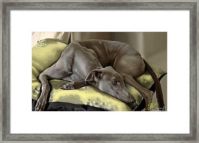 Blue Grey Framed Print by Ari Caer