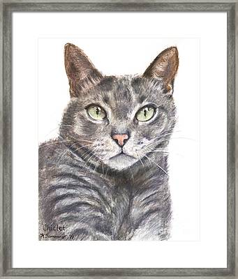 Blue Grey Cat With Piercing Green Eyes Framed Print