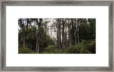 Blue Gum Eucalyptus Forest Framed Print by Brad Scott