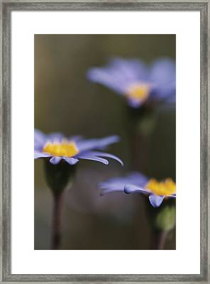 Blue Haze Framed Print by Caitlyn  Grasso