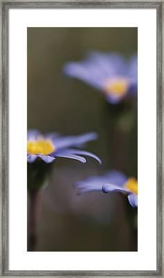 Blue Haze II Framed Print by Caitlyn  Grasso