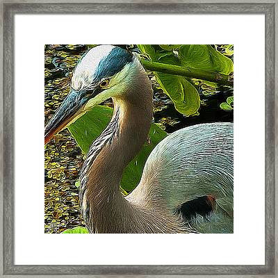 Blue Heron Addict Framed Print