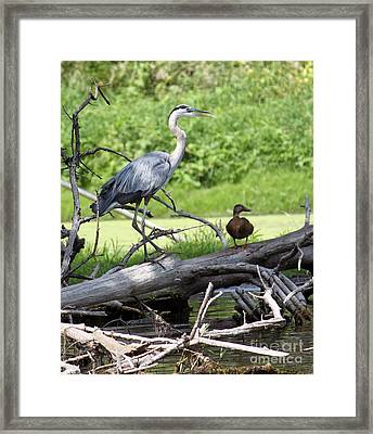 Blue Heron And Friend Framed Print