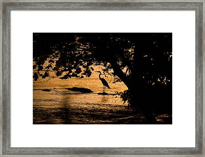 Blue Heron At Sunset Framed Print
