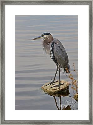 Blue Heron IIi Framed Print