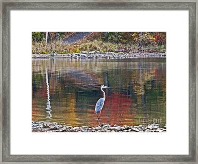 Framed Print featuring the photograph Blue Heron In Autumn by Joan McArthur