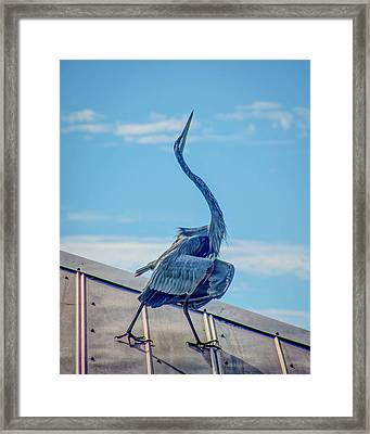 On The Catwalk Framed Print by Jerri Moon Cantone