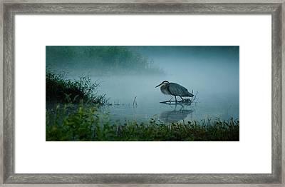 Blue Heron Morning Framed Print