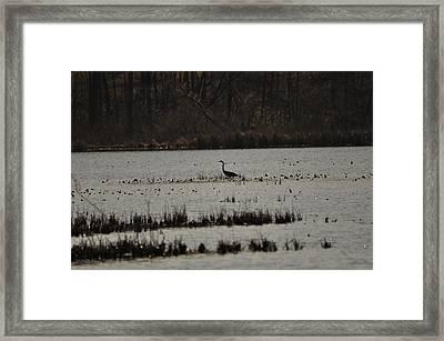 Blue Heron On Lake Framed Print by Valarie Davis