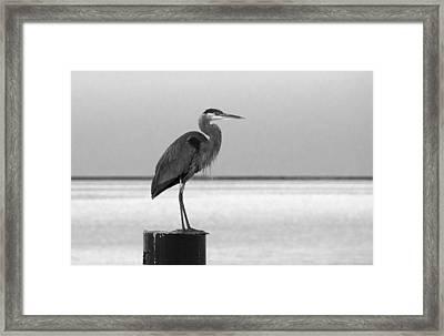 Blue Heron On Post Framed Print