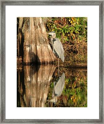 Blue Heron Reflection Framed Print by Jeff Wright