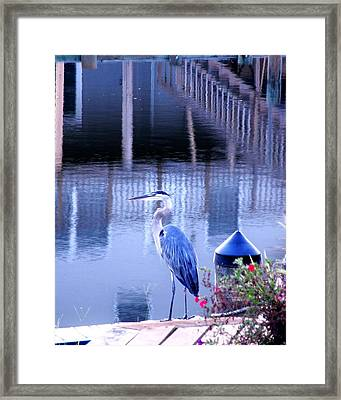 Blue Heron Reflections Framed Print