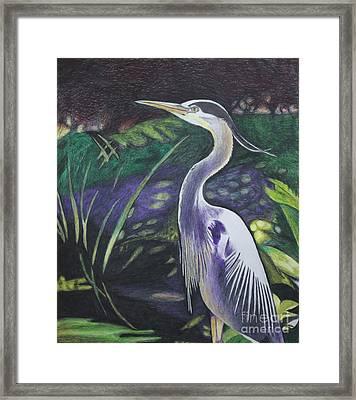 Blue Heron Framed Print by Terri Thompson