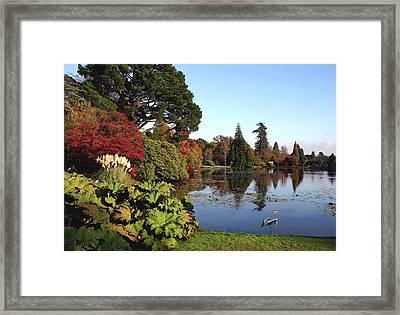 Blue Heron Visit To Fall Lake Framed Print