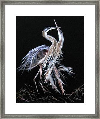 Blue Herons Mating Dance Framed Print
