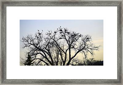 Blue Herons Framed Print