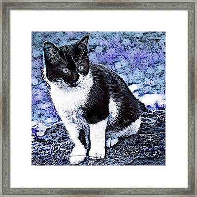 Framed Print featuring the photograph Blue Hindy by Selke Boris