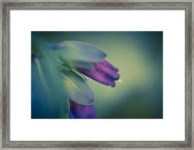 Blue Honeywort Framed Print by Priya Ghose
