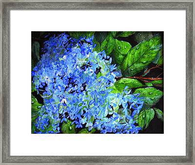 Framed Print featuring the painting Blue Hydrangea After The Rain by June Holwell