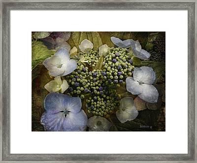 Framed Print featuring the photograph Blue Hydrangea by Barbara Orenya