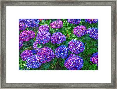 Framed Print featuring the photograph Blue Hydrangea by Hanny Heim
