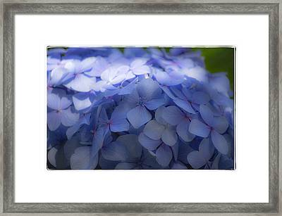 Framed Print featuring the photograph Blue Hydrangea One by Craig Perry-Ollila